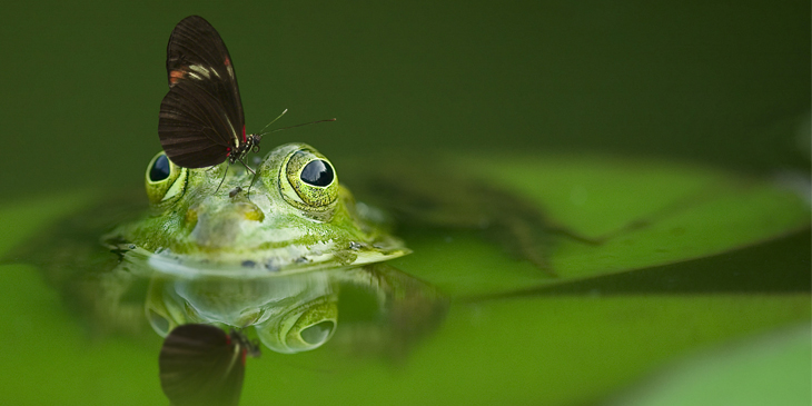 Frog and butterfly in pond